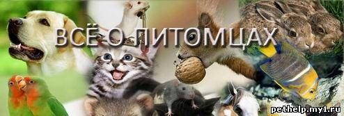 Все о домашних животных в Иркутске
