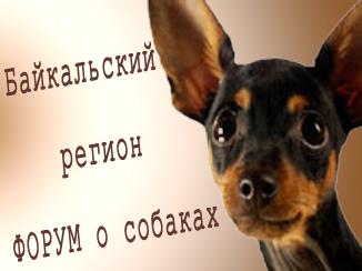 Байкальский регион. Форум о собаках.